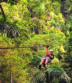 Zipline across the canopy