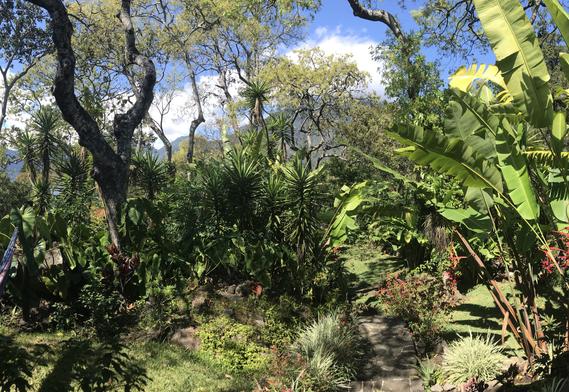 Casa Maya garden