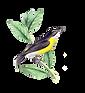 bird-4489182_1280.png