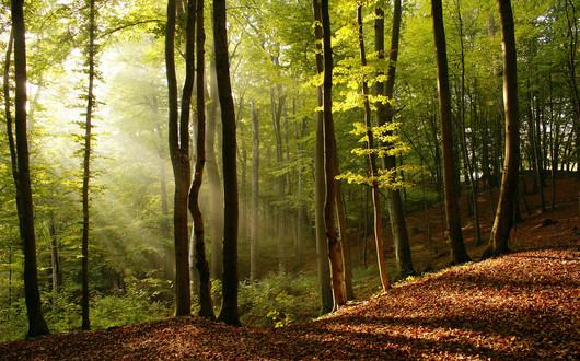 Soleil_à_travers_les_arbres.jpg
