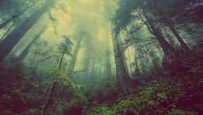 Gran Bwa: a árvore dos mundos