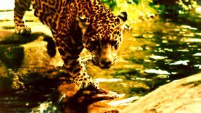 Agassou: um Lwa com sangue de leopardo