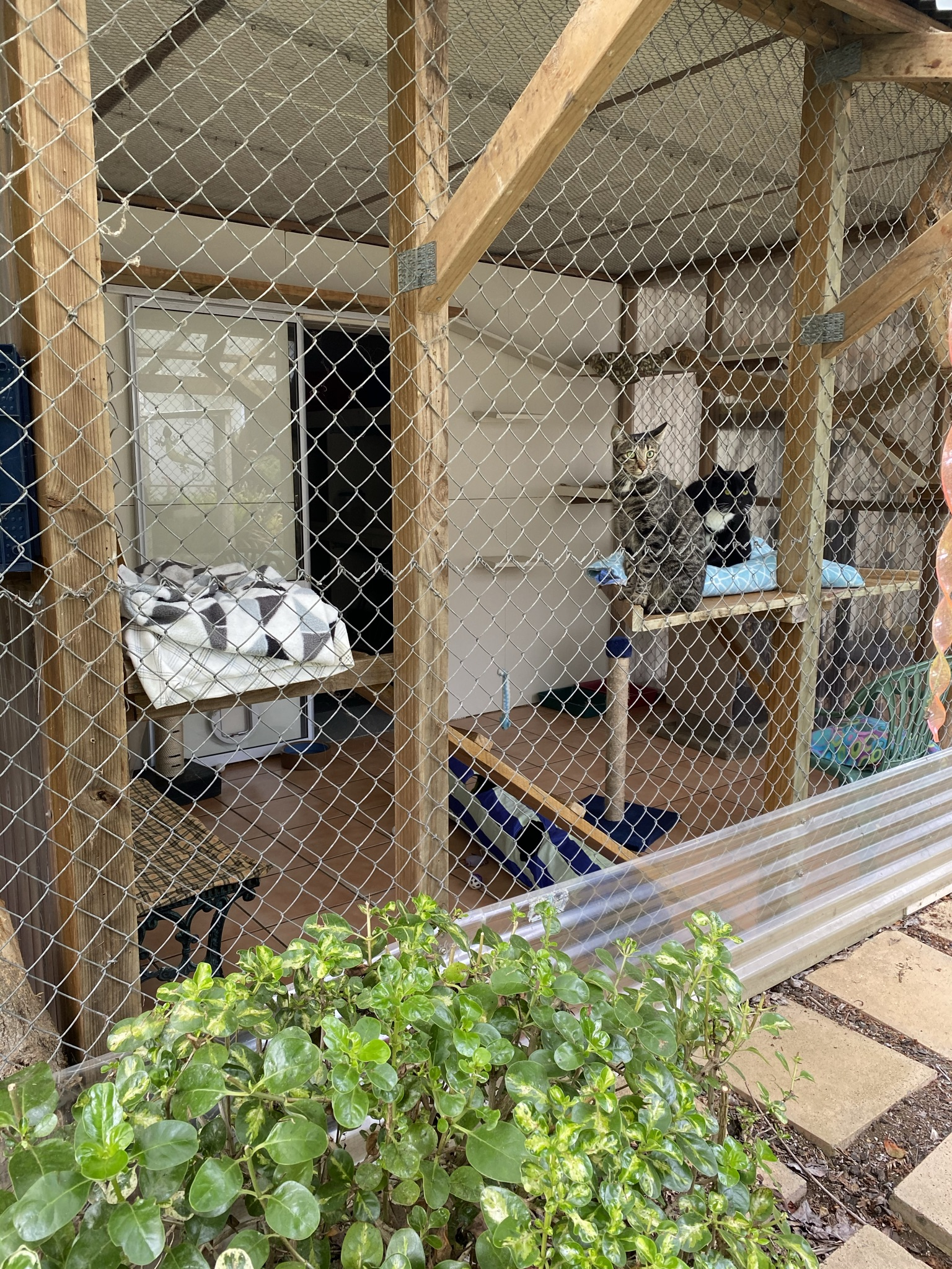 main cattery outside area