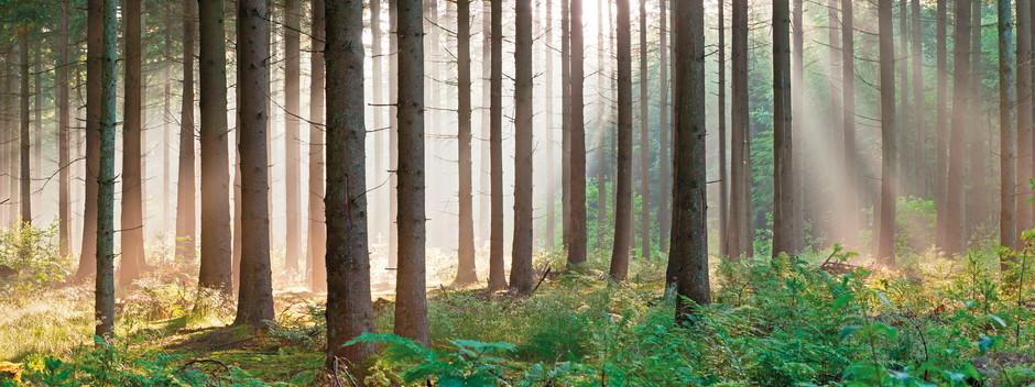 Metsätajunnalla on kenttä