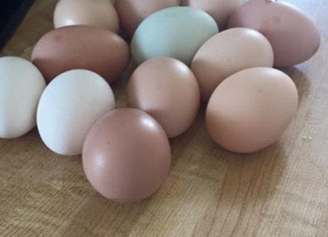 Mixed Color Chicken Eggs