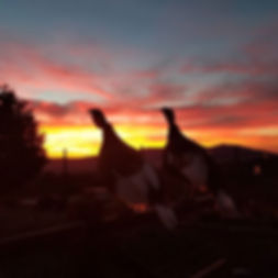 Tonight's sunset!!! I snapped a pic of e
