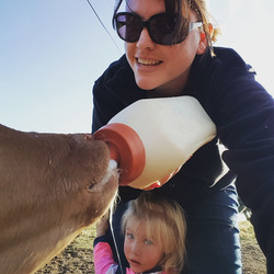Feeding our bottle calf, Gingerbread