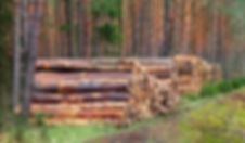 florestal3.jpeg