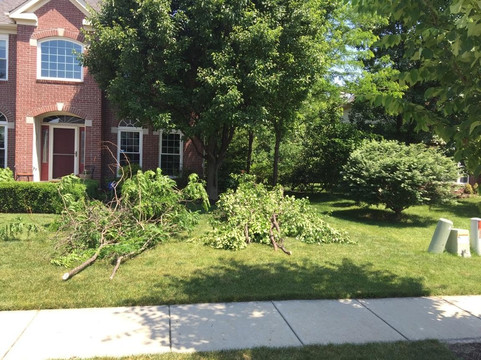 free Brush Removal Indianapolis