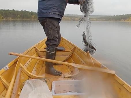 May virtual workshop Day 1: Sámi Food Culture
