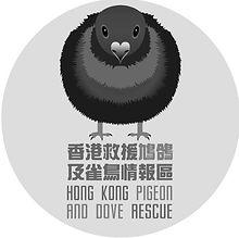 香港救援鳩鴿及雀鳥.jpg