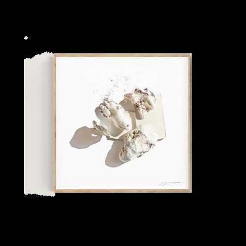 White shells & a tree II