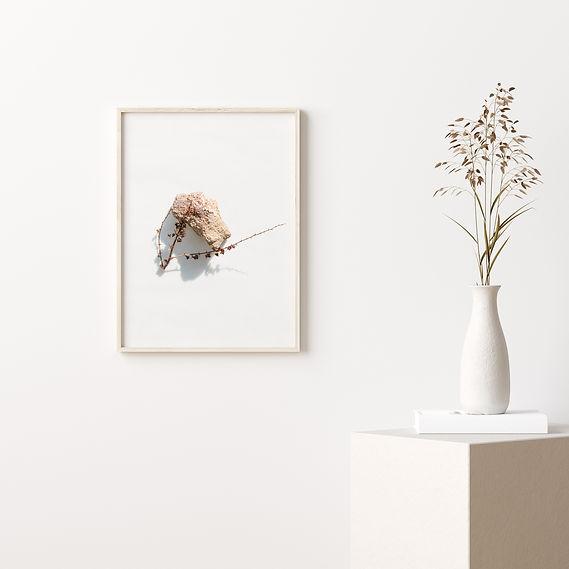 photographie-nature-morte-cors
