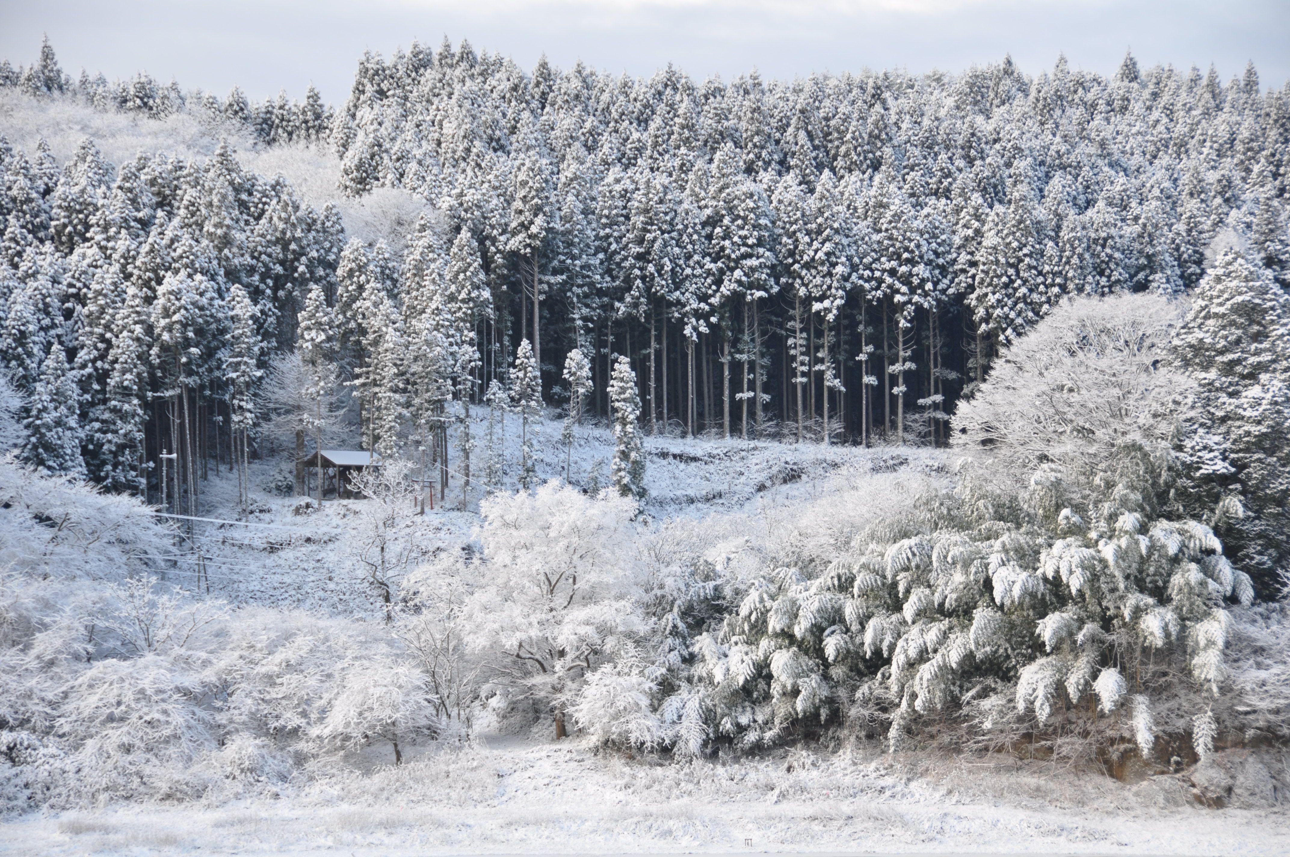 冬の静寂が花山を包みます。