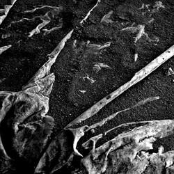 traces (12)