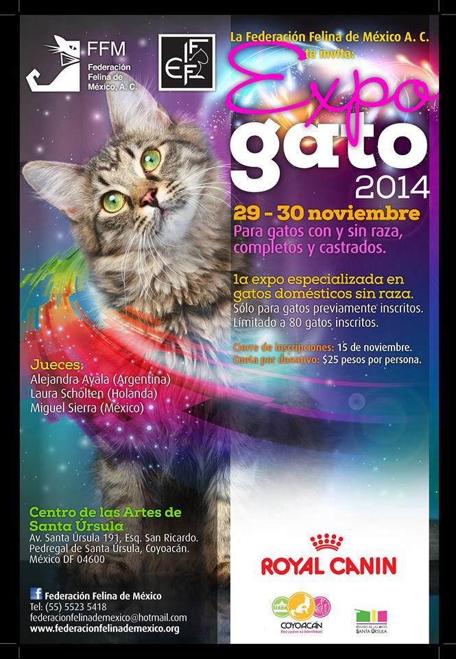 XXXIX & XL EXPO GATO 2014
