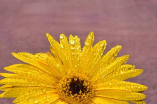 waterflower
