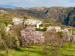 La Taha in almond blossom
