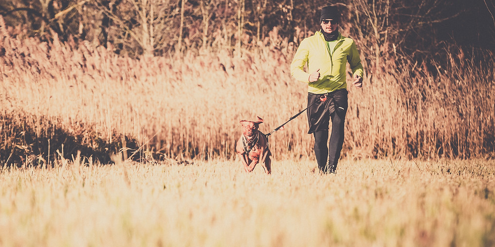Run Dog 2020 Tavasz