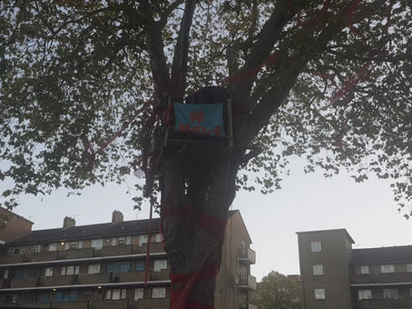 Happy Man Tree is voted England's Tree of the Year