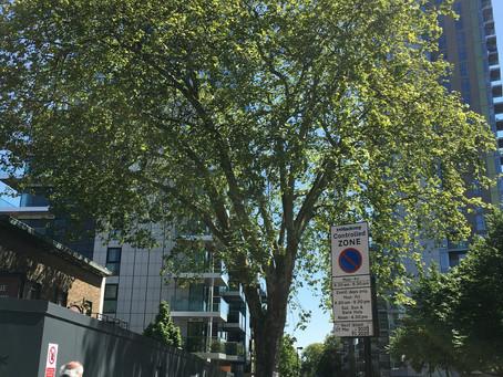 Tree Visit 15th May 2020