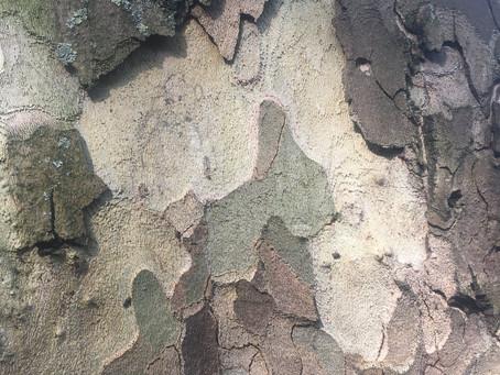 Tree Visit 4th May 2020