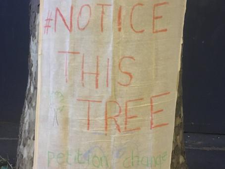 Tree Visit 13th May 2020