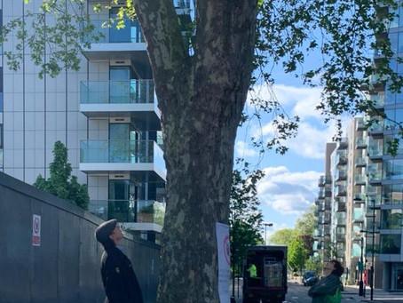 Tree Visit 3rd May 2020