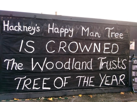 The Woodland Trust on the Happy Man Tree -  Tree of the Year