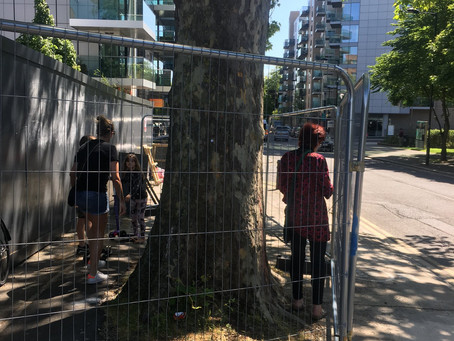 Tree Occupation 19th May 2020