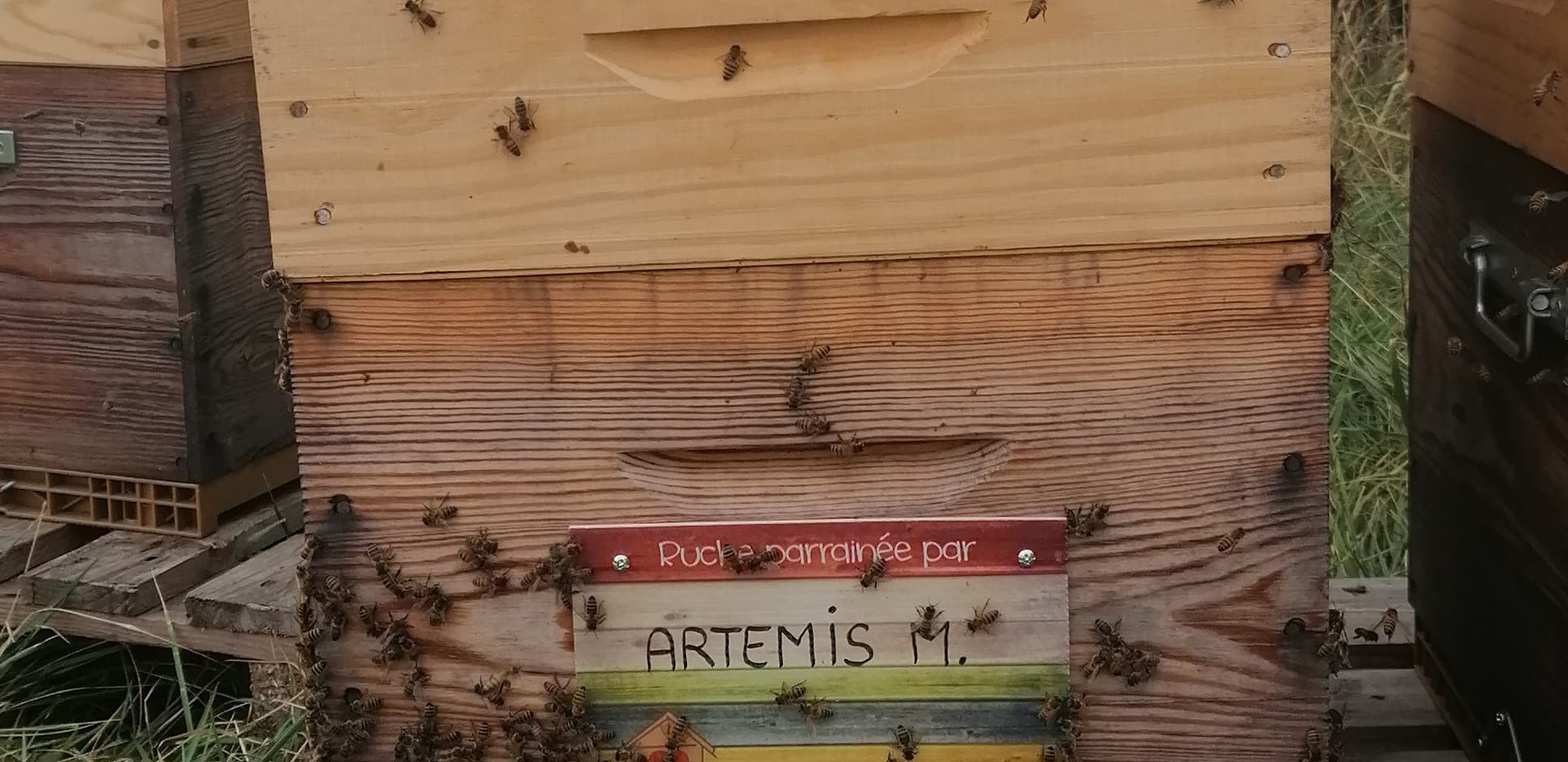 ARTEMIS. M