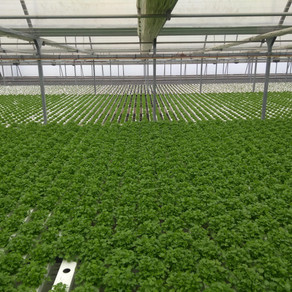 Know More About Hydroponics