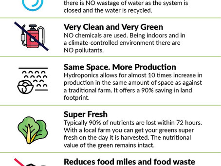 Understanding Hydroponic - The Future of Farming