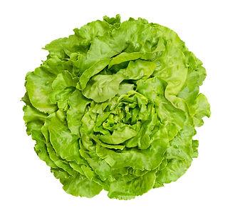 butterhead-lettuce-from-above-over-white