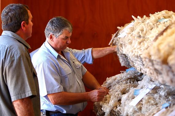 Wool Grading, Hughenden Show.Western Qld