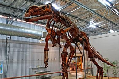 Muttaburrasaurus. Flinders Discovery Centre, Hughenden.Qld