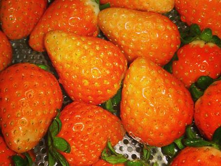 池田屋の食べ物:春の宇和イチゴ
