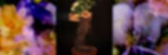 floral promo image 3.jpg