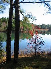 monkey lake