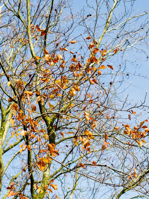 tree in the autumn losing its foilage