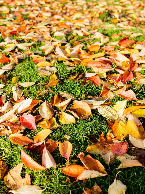 yellow and red leaves on a green lawn