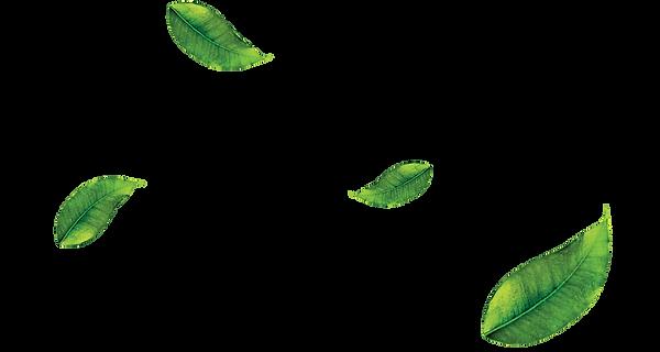 leaf-png-21.png