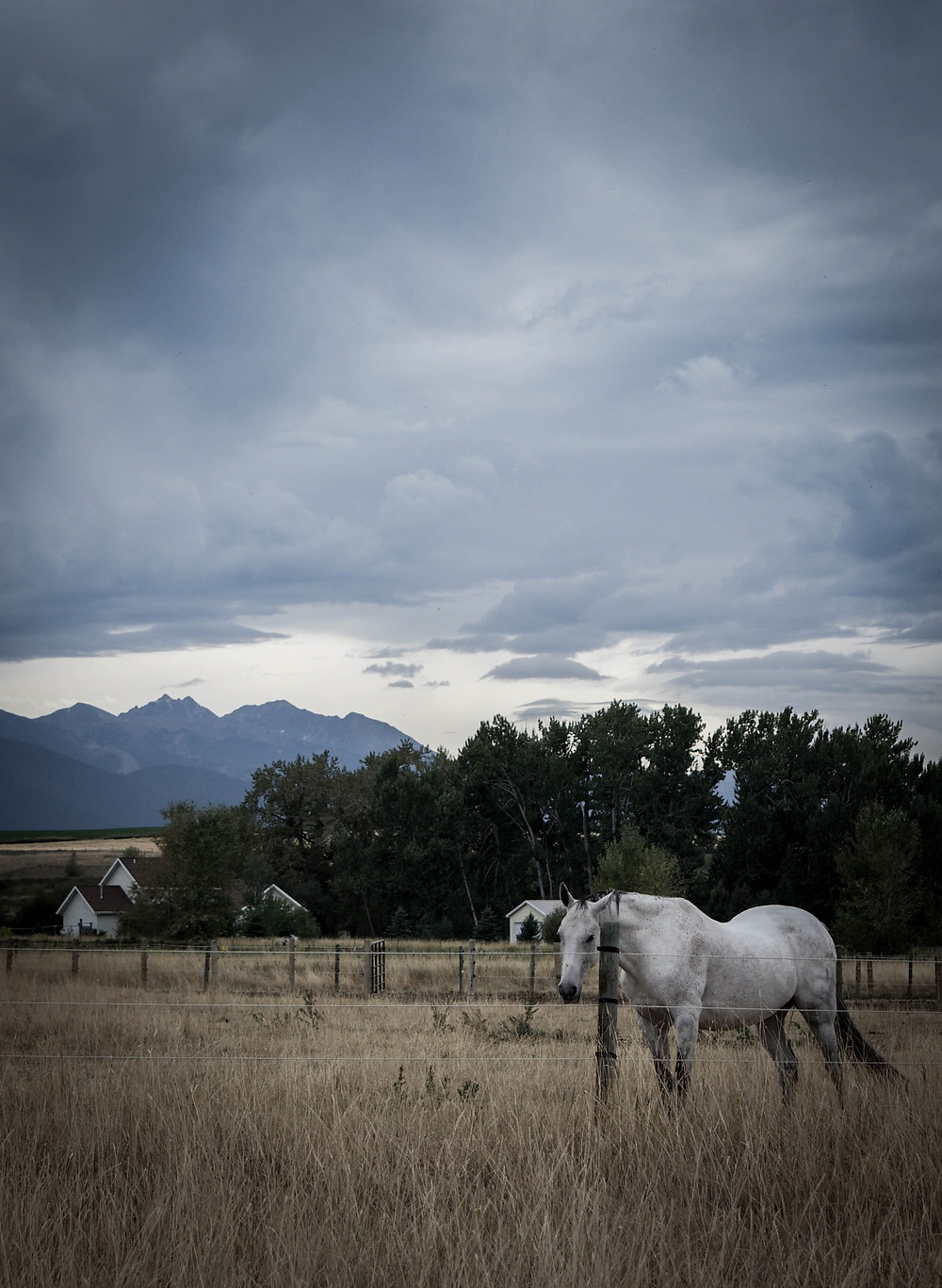 townandcountry horses 2