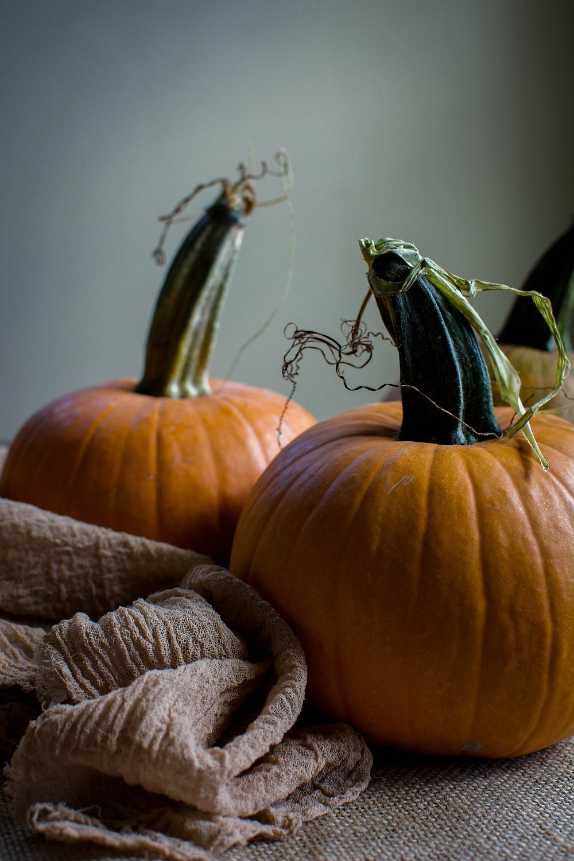 pumpkin trio 5