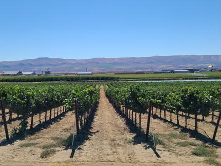 2021 Wine Club Vineyard Tour Photos