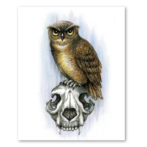 """Owl Skull- 8"""" x 10"""" Art Print"""