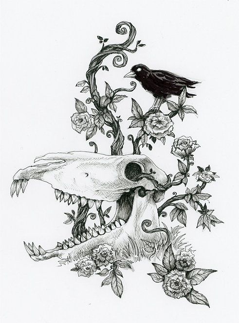 Macabre Skull pen and ink drawing Raven Diana Levin Art