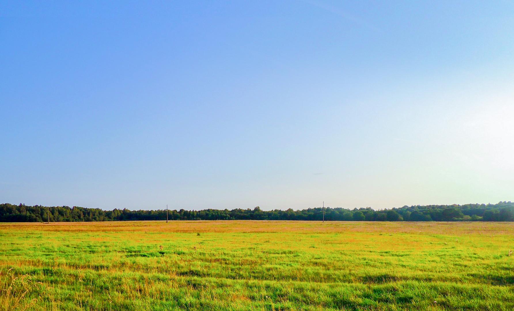 поле поле.jpg
