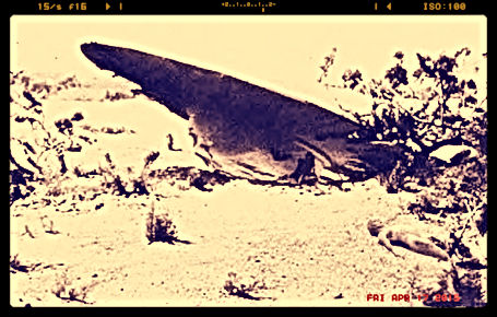 roswell crashed ufo with alien body pic fake or real