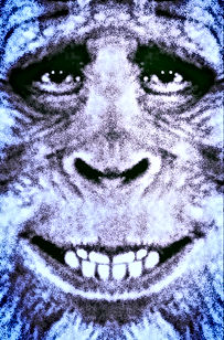 bigfoot harry fullface